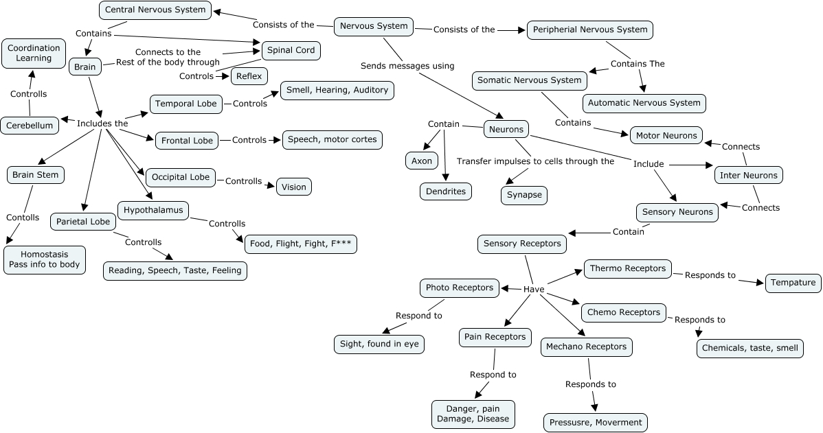 famous nervous system concept map answers