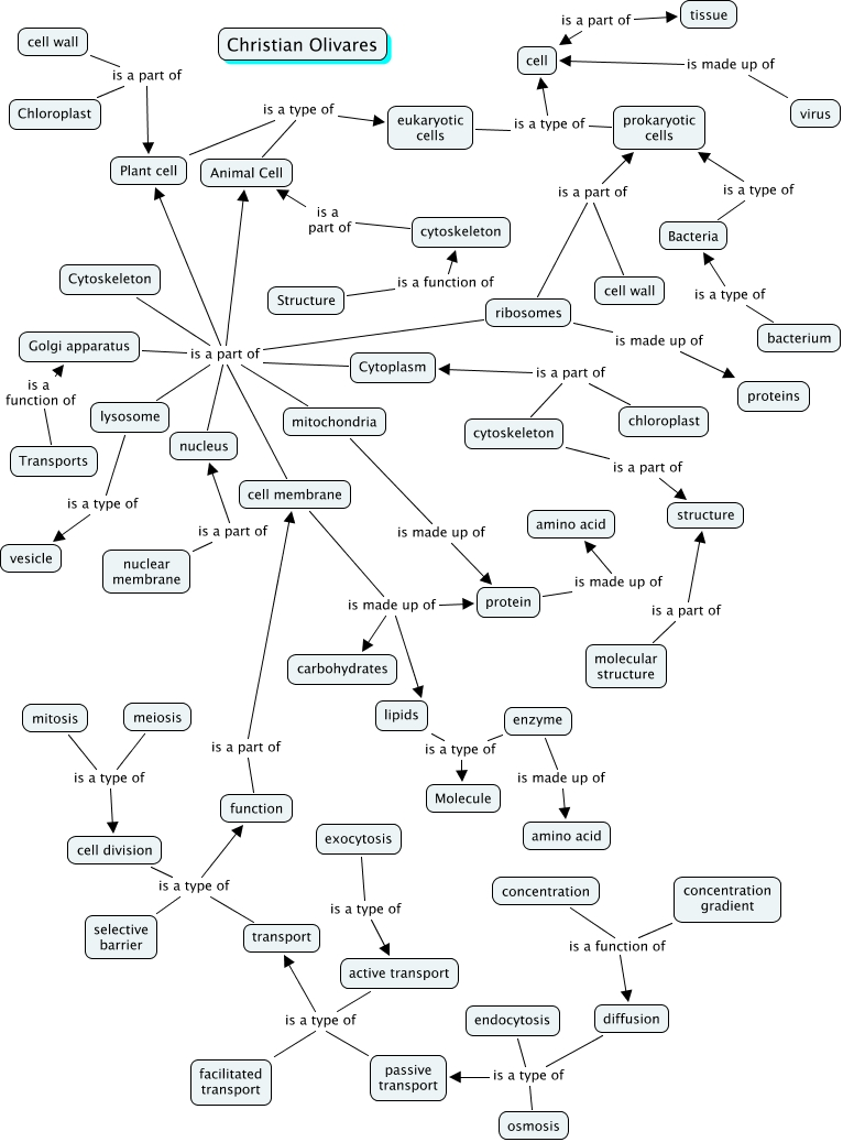 Christian--Cell concept map