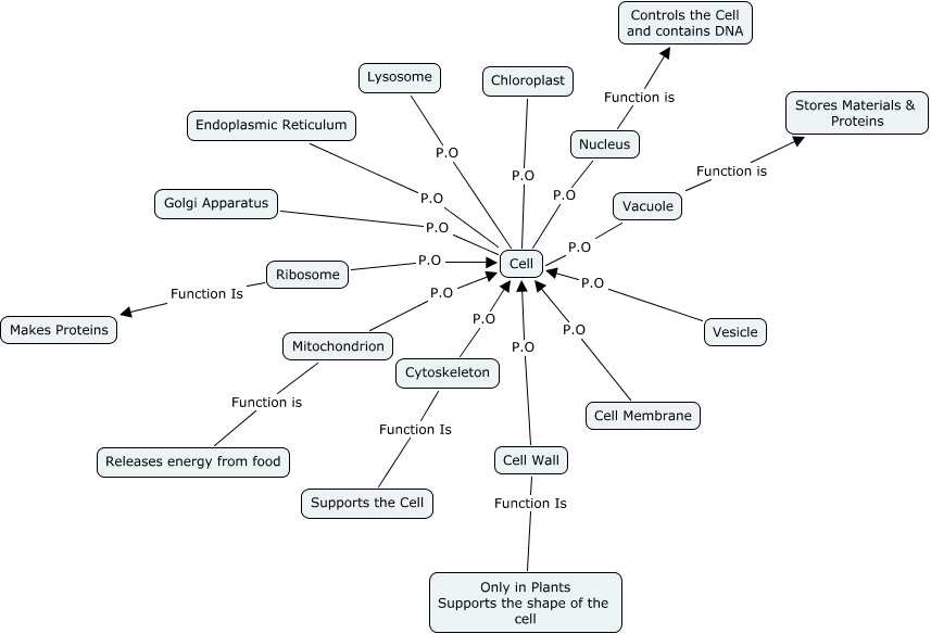 Proteins Concept Map.Becky Concept Map Of Cell